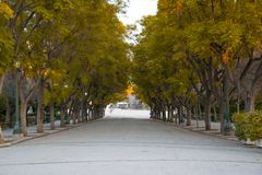 Autumn Tree Road in Zappeion stock afbeeldingen