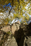 Autumn tree at the rock Royalty Free Stock Images