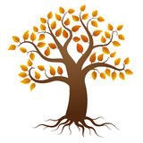 Autumn tree with roots Stock Image