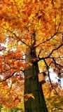 Autumn. Tree shot royalty free stock images