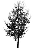 An autumn tree silhouette Royalty Free Stock Images