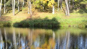 Autumn tree silhouette reflection forest lake water grow shore. Autumn vibrant colorful tree silhouette reflections on forest park ripple lake water surface and stock video footage