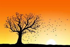 Autumn tree silhouette Stock Photos