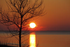 Autumn Tree Silhouetted vid den Lake Huron solnedgången Royaltyfri Bild