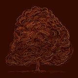 Autumn tree sketch Stock Photos