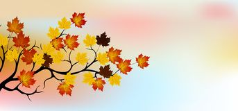 Autumn tree with sky background Stock Photo
