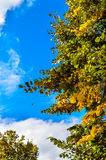 Autumn tree sky clouds copy space Royalty Free Stock Images
