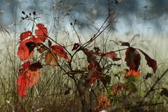 Autumn, Tree, Smaller Tree, Nature Royalty Free Stock Photo