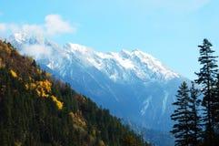 Autumn tree and snow mountain Royalty Free Stock Image