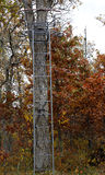 Autumn tree stand Royalty Free Stock Photography