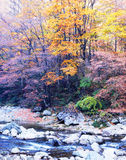 Autumn tree and  stream Royalty Free Stock Image