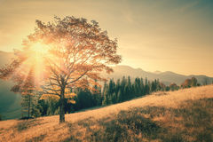 Autumn tree and sunbeam warm day in vintage color Stock Photography