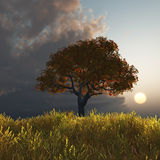 Autumn tree at sunset stock illustration