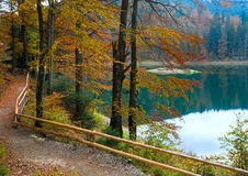 Autumn tree and Synevir lake Stock Image