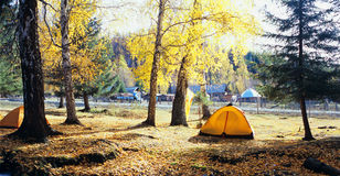 Autumn tree and tent stock image