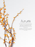 Autumn tree text card Stock Images