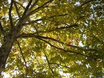 Autumn in tree top stock photo