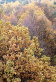 Autumn tree top foliage Royalty Free Stock Photos