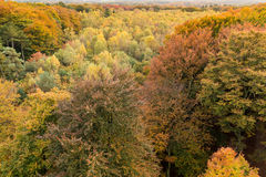 Autumn tree tops from above, Netherlands Royalty Free Stock Images