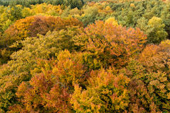 Autumn tree tops from above, Netherlands Stock Image