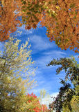 Autumn Tree Tops with Sky Background Royalty Free Stock Photos