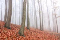 Autumn tree Stock Photos