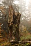 Autumn Tree Trunk. Closeup in forest Stock Photos