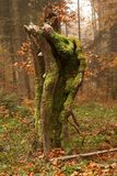 Autumn Tree Trunk. Closeup in forest Royalty Free Stock Photo