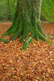 Autumn tree trunk. Royalty Free Stock Photos