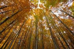 Autumn tree trunks Stock Photography
