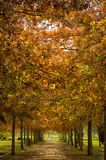 Autumn Tree Tunnel Imagem de Stock Royalty Free