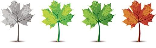 Autumn Tree Variant Immagine Stock