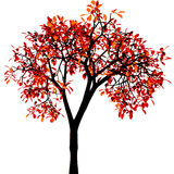 Autumn tree. Vector. Autumn tree. Fully vector illustration Royalty Free Stock Images