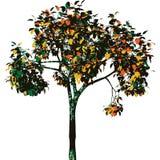 Autumn tree. Vector. Autumn tree. Fully vector illustration royalty free illustration