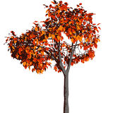 Autumn tree. Vector. Stock Images
