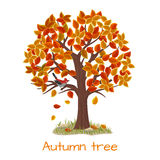 Autumn tree vector Stock Photography