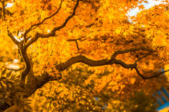 Autumn tree, very shallow focus. Autumn yellow tree, very shallow focus stock photo