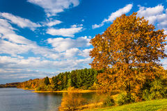 Autumn tree and view of Lake Marburg, at Codorus State Park, Pen royalty free stock photography