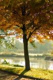 Autumn tree. Water birds sun colorful Royalty Free Stock Photos