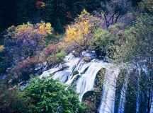 Autumn tree and waterfall Royalty Free Stock Photos