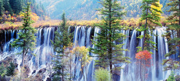Autumn tree and waterfall in jiuzhaigou Royalty Free Stock Photography