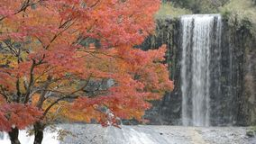 Autumn tree and waterfall stock video