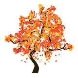 Autumn tree  on white background,. Illustration Stock Photos