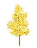 Autumn tree on white background. Illustration of a yellow autumn tree,  isolated on a white background Royalty Free Stock Images