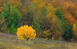 Autumn tree Stock Photos