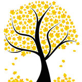 Autumn tree with yellow leaves Royalty Free Stock Photography