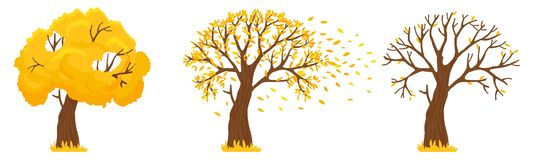 Free Autumn Tree. Yellow Leaves Fall, Trees With Fallen Leaves And Orange Leafs Fly Vector Illustration Royalty Free Stock Image - 157562726