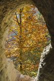 Autumn tree with yellow leaves through the hole of a cave Royalty Free Stock Photos