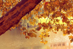 Autumn tree. Yellow autumn tree and the object in the lake Royalty Free Stock Images