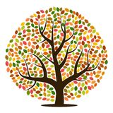 Autumn tree with yellow, orange, brown and green leaves. Vector illustration Stock Image